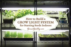 This inexpensive grow light shelving system is perfect for starting seeds indoors and growing greens in winter. See how you can assemble your own from some easy to find items: