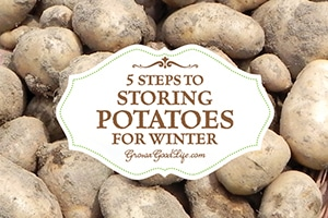 Potatoes are easy to grow, store well through the winter, and provide a nutritious addition to most of our meals. Do you grow your own potatoes or buy in bulk from a farmer's market? Check out 5 easy steps to storing potatoes for winter.