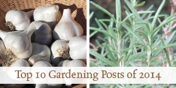 Top 10 Gardening Posts of 2014