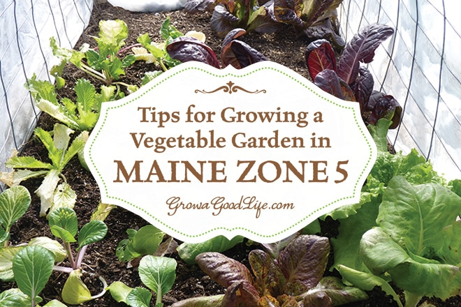 Tips for Growing a Vegetable Garden in Maine Zone 5 | Grow a Good Life