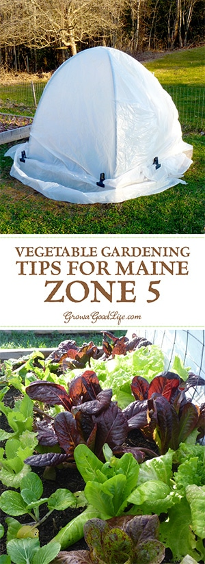 Even when faced with a short growing season, a lot can be harvested with some experimentation and careful planning. I continue to strive to make the most of our gardening season by discovering creative ways to extend the season, select crops with a short maturity date, and try to keep the beds producing by succession planting.