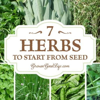 Growing herbs is easy because once the plants are established, they require very little maintenance and produce a generous supply for harvests as needed and enough to dry and fill your spice jars.