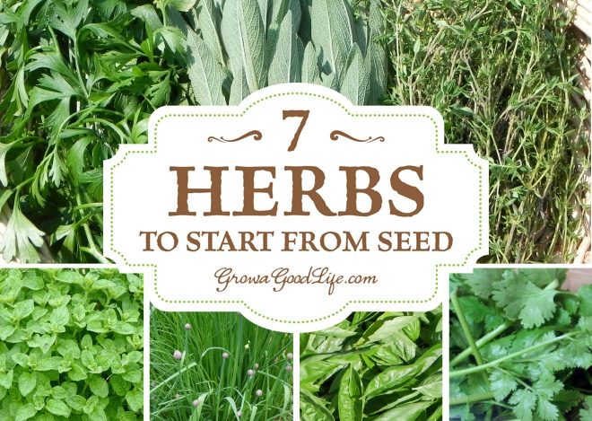 growing herbs  herbs to start from seed, Beautiful flower
