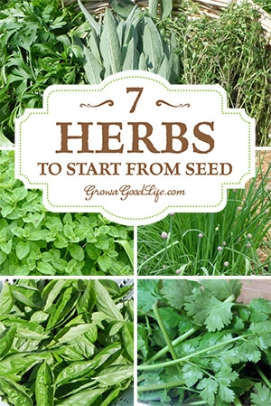 Growing Herbs: 7 Herbs to Start from Seed | Grow a Good Life