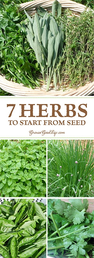 Growing herbs from seed is an inexpensive way to fill your garden and pantry with plenty of flavor. These are some of my favorite culinary herbs to grow from seed year after year.
