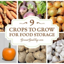 If you have a root cellar or cool basement consider experimenting with growing some of these crops for winter food storage.