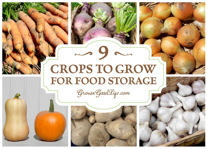 9 Crops to Grow for Food Storage