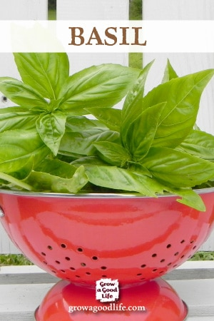 Growing Herbs: 7 Herbs to Start from Seed | Basil | Grow a Good Life