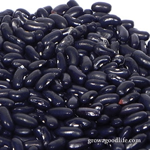 Crops to Grow for Food Storage: Dried Beans | Grow a Good Life
