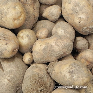 Crops to Grow for Food Storage: Potatoes | Grow a Good Life