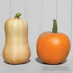 Crops to Grow for Food Storage: Winter Squash | Grow a Good Life