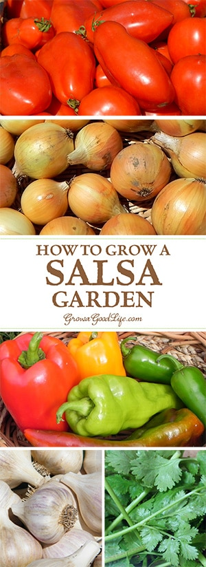 If you enjoy eating fresh salsa in the summer, growing a salsa garden will provide you with the ingredients you need to whip up salsa at a moments notice.