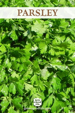 Growing Herbs: 7 Herbs to Start from Seed | Parsley | Grow a Good Life