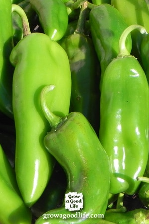 Peppers for your Salsa Garden | Grow a Good Life
