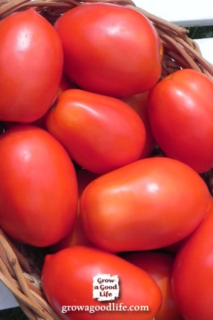 Tomatoes for your Salsa Garden   Grow a Good Life