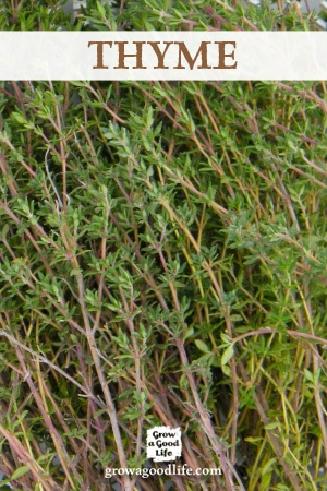 Growing Herbs: 7 Herbs to Start from Seed | Thyme | Grow a Good Life