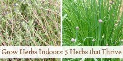 Grow Herbs Indoors: 5 Herbs That Thrive Inside | Grow a Good Life