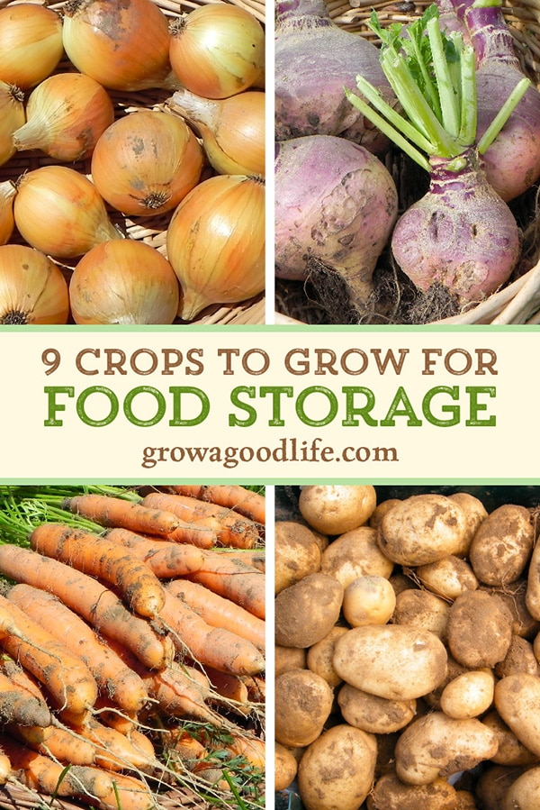 collage image of onions, turnip, carrots, and potatoes for food storage