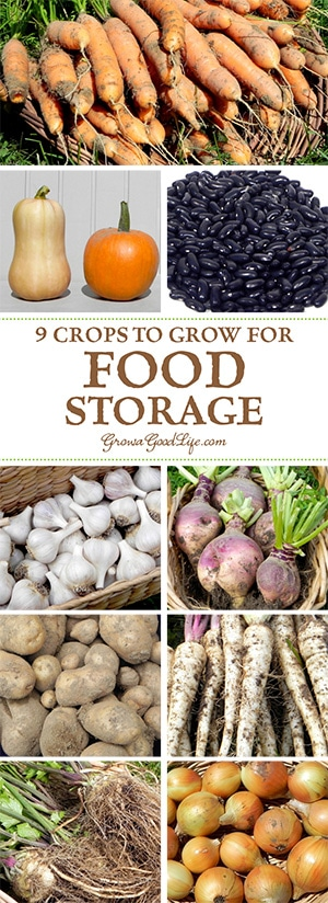 If you have an area in your basement that stays cool all winter long, you can make use of these cold spots to keep storage crops fresh well into winter. Try experimenting with growing some of these keeper crops for winter food storage: