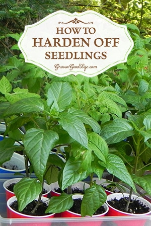 How to Harden Off Seedlings | Grow a Good Life