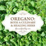 Oregano: Both a Culinary & Healing Herb