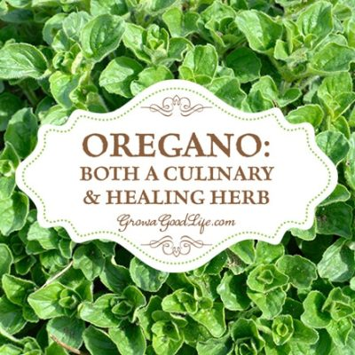Oregano: Both a Culinary & Healing Herb | Grow a Good Life