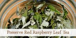 Harvest and Preserve Red Raspberry Leaf Tea   Grow a Good Life