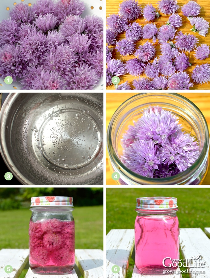 photos showing the steps to making chive blossom vinegar infusion