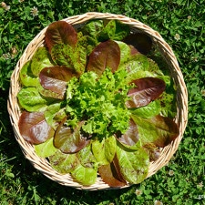 Weekly Harvest: June 29, 2015 | Grow a Good Life