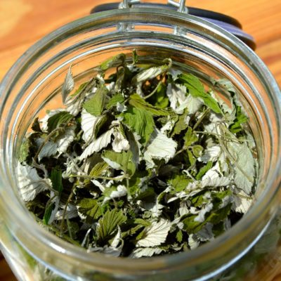 Raspberry leaf tea is delicious and resembles a light, green tea without the caffeine. See how to collect and dry red raspberry leaves for tea.