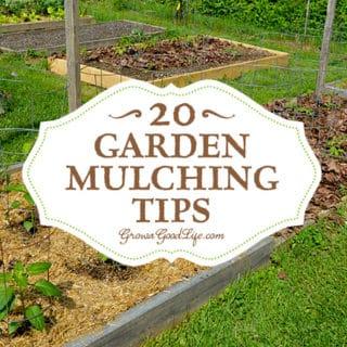 20 Garden Mulching Tips from Seasoned Growers