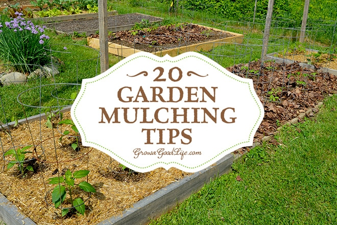 garden mulching tips from seasoned growers, Natural flower