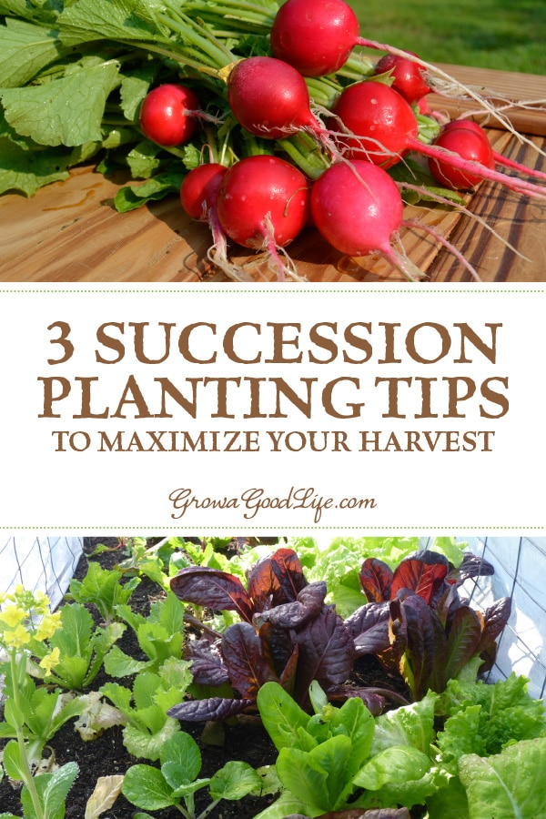 Learn how to grow vegetables through the seasons with a succession planting strategy. Visit for three succession planting tips to maximize your vegetable garden harvest.