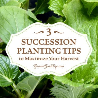 3 Succession Planting Tips to Maximize Your Harvest