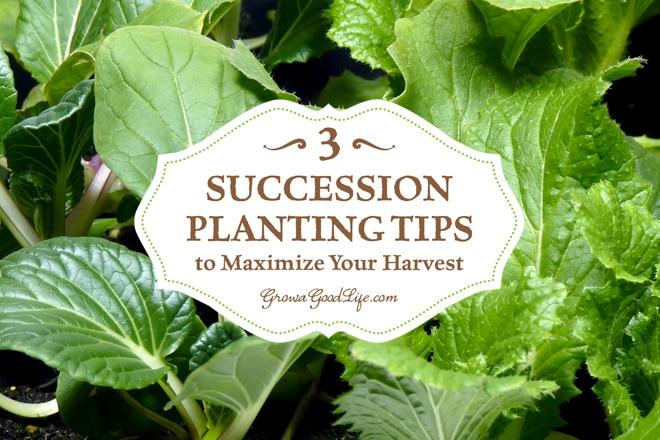 The goal of succession planting is to make the most of your garden space and keep the beds growing and producing fresh harvests.