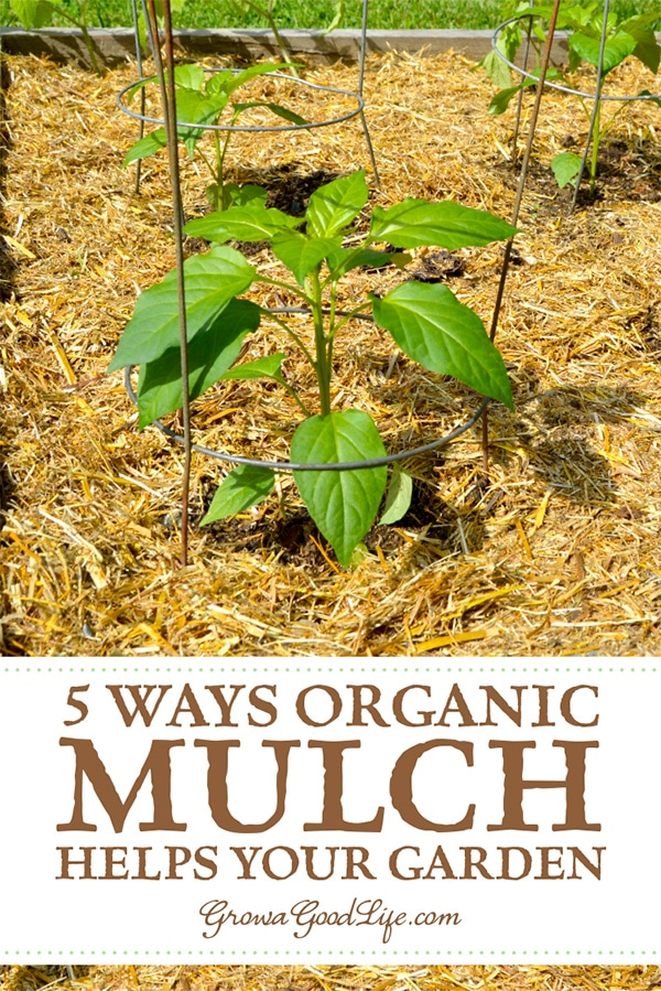 Mulch is any type of material that layered on the surface of the soil. Mulching your garden beds not only helps suppress weeds, it also prevents soil erosion and moderates soil-temperature fluctuations. Read on to learn more ways organic mulch helps your vegetable garden.