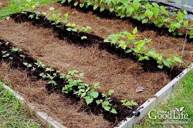 20 Garden Mulching Tips from Seasoned Growers | Grow a Good Life