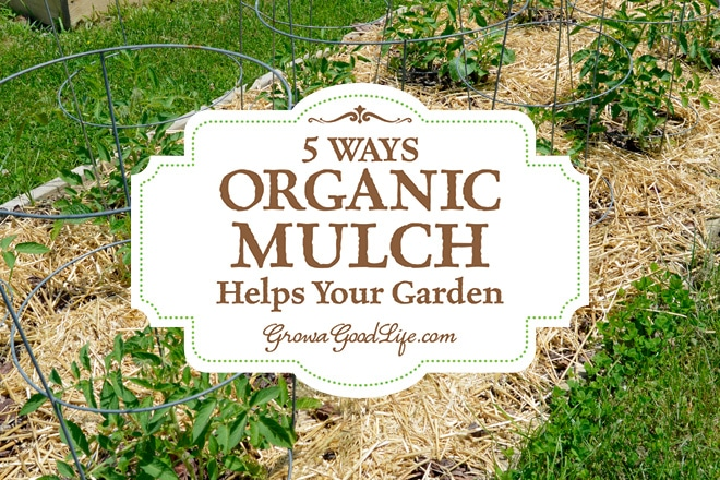 ways organic mulch helps your vegetable garden, Natural flower