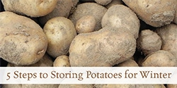 Follow these 5 easy steps to storing potatoes for winter to keep your potatoes fresh.
