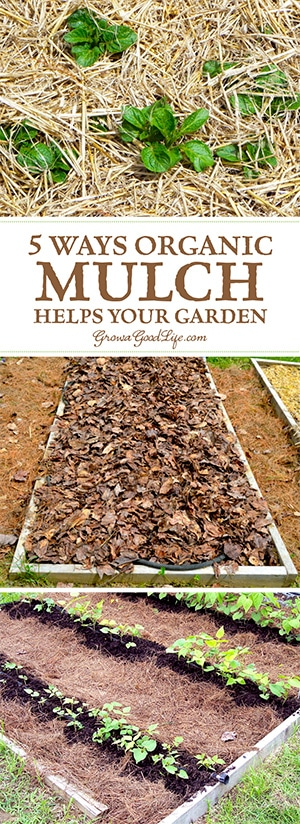 Mulch is any type of material that layered on the surface of the soil. Mulching your garden beds not only helps suppress weeds, it also prevents soil erosion and moderates soil-temperature fluctuations. Water, air and nutrients can filter through and reach the soil, but the mulch prevents moisture from evaporating and shades the soil surface keeping the roots cool. Organic mulches break down over time, enriching your soil as they decompose.