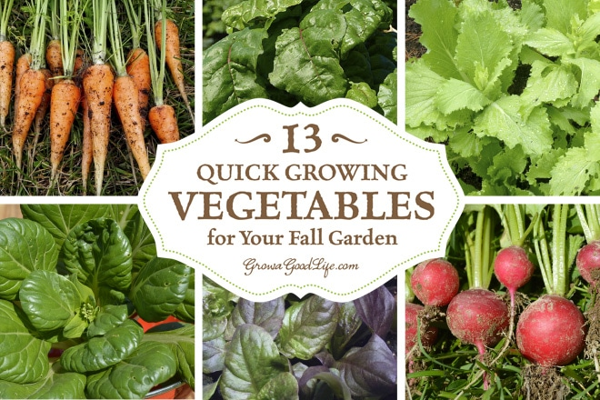 as fall approaches most of the summer crops begin to wind down instead of - Fall Garden Plant