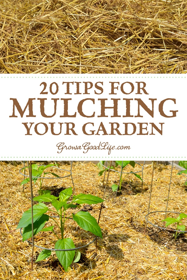 Mulching is one of the best things you can do for your vegetable garden. It protects the soil from erosion, moderates the soil temperature, and makes the garden look neat and tidy. Here are 20 tips for mulching your garden.