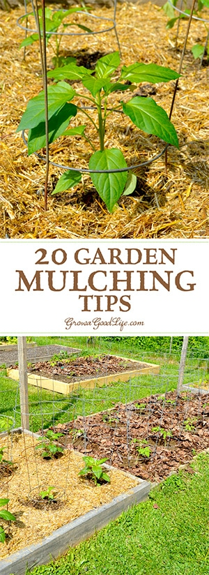 Mulching is one of the best things you can do for your garden. A generous layer of mulch over the soil surface will suppress weeds, retain moisture, and provide and soil enrichment as it decomposes.