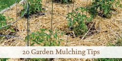 Discover mulching methods that will work in your garden and heed some mulch warnings too.