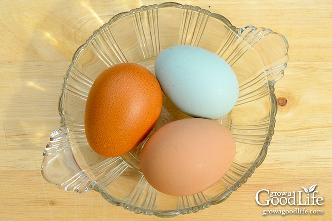 First Eggs: Phoebe (Blue), Emily (Tan), and Claire (Dark Brown)