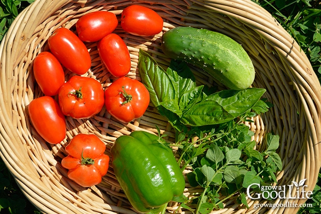 Tomatoes, Pepper, Cucumber, and Herbs