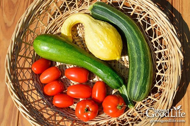 Tomato, Zucchini, and  Crookneck Squash
