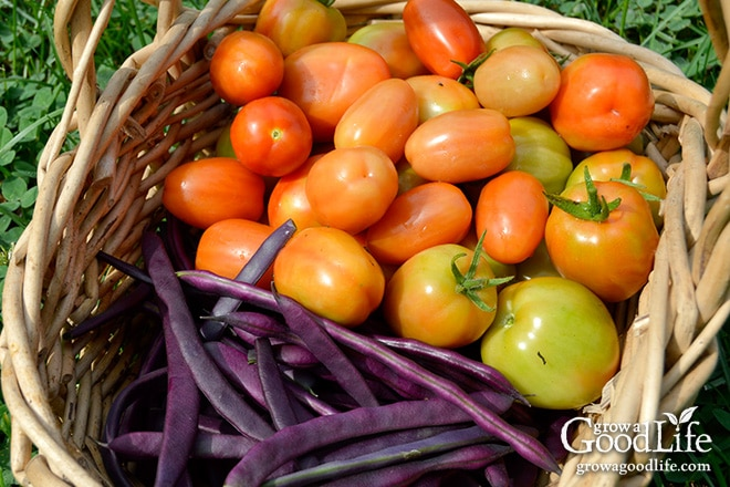 Celebrating the harvest and encouraging everyone to grow their own food! Sharing garden harvest photos for the week of August 24, 2015.