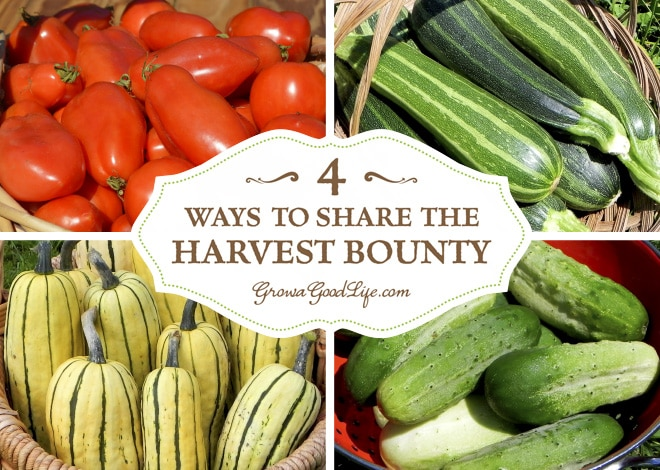 What do you do after you have preserved all the harvest that you can and the garden is still producing? Even when you take the time to try to estimate how many plants to grow for fresh produce and enough to preserve, often times there is a bumper crop of one thing or another. Here are some ways to share the harvest bounty instead of tossing the extras into the compost bin.
