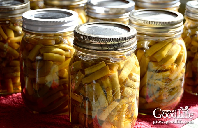 jars of canned string beans cooling on the counter